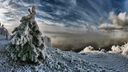 fir-tree, snow, weight