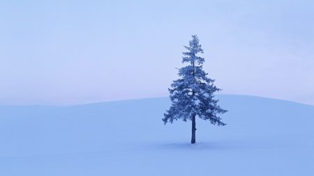 fir-tree, winter, snow