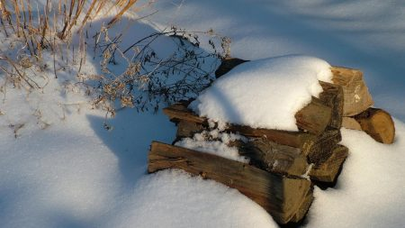 fire wood, snow, winter