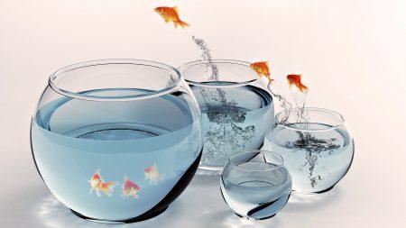 fish, aquarium, gold