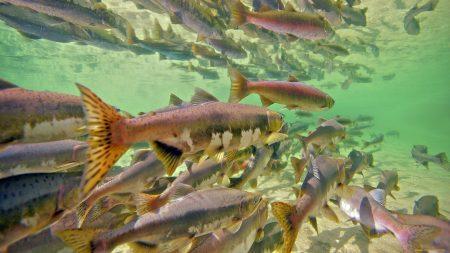 fish, many, underwater