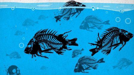 fish, skeleton, paint