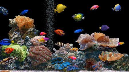 fish, underwater, colorful