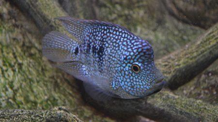fishes, scales, aquarium