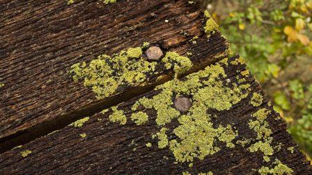 floor, wood, moss