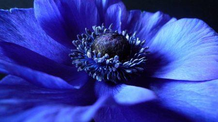 flower, background, blue