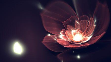 flower, background, dark