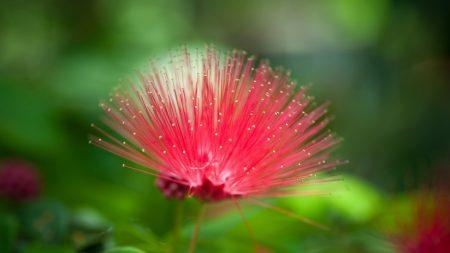 flower, beautiful grass, unusual