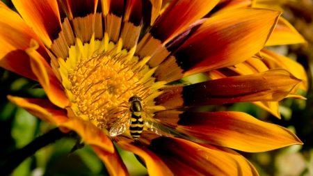 flower, bee, petals