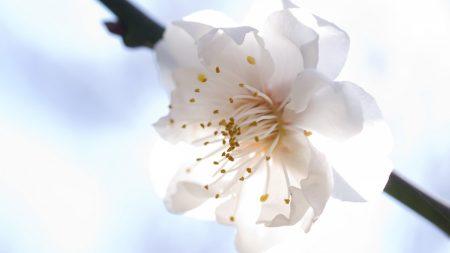 flower, bloom, bright