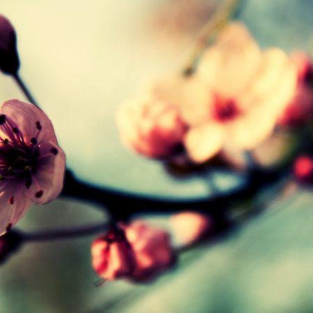 flower, blossom, plant