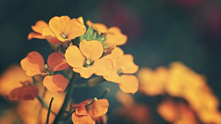 flower, bouquet, small