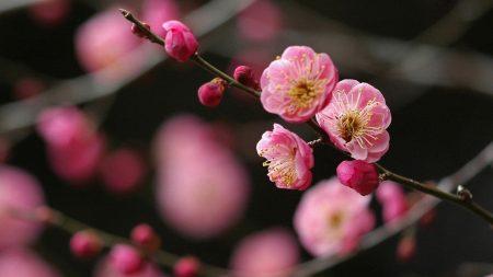 flower, branch, plant