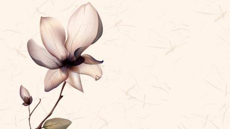 flower, bright, shiny
