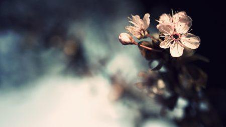 flower, bright, white