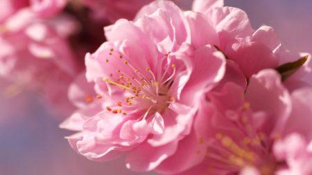 flower, bud, blossom
