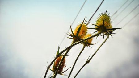 flower, bud, nipping