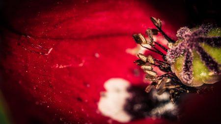 flower, bud, petals