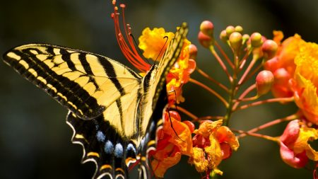 flower, butterfly, colorful