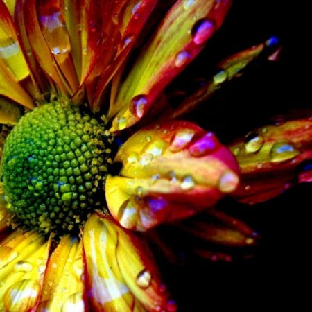 flower, colorful, drops