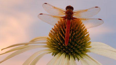 flower, dragonfly, sky