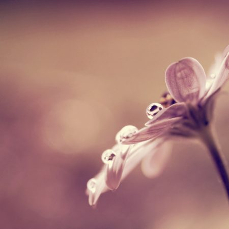 flower, drop, reflections