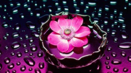 flower, drops, water