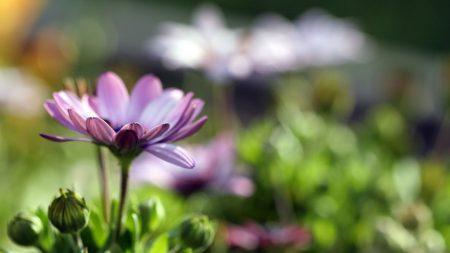 flower, field, grass