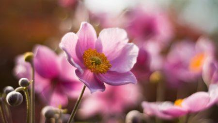 flower, field, stem