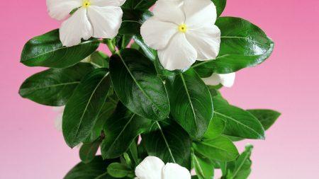 flower, flowering, green
