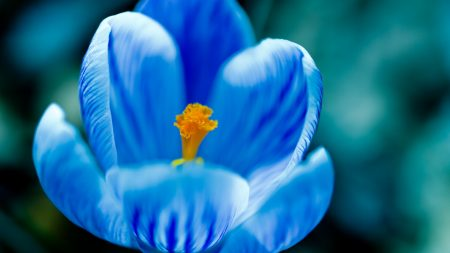 flower, form, petals