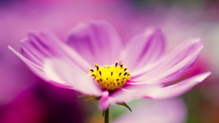 flower, glare, blurred