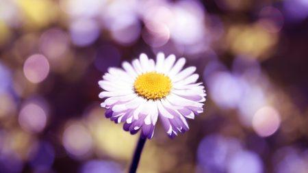 flower, glare, petals