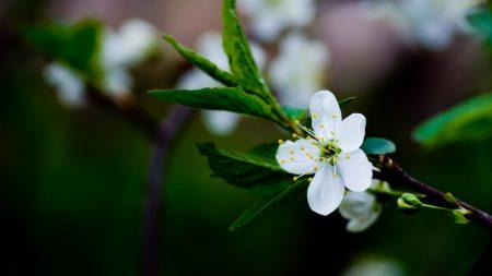 flower, grass, blooming