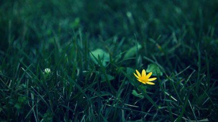 flower, grass, dark