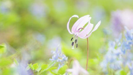 flower, grass, leaves