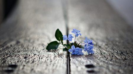 flower, lies, board