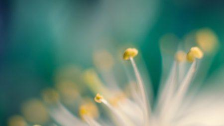 flower, macro, stamens