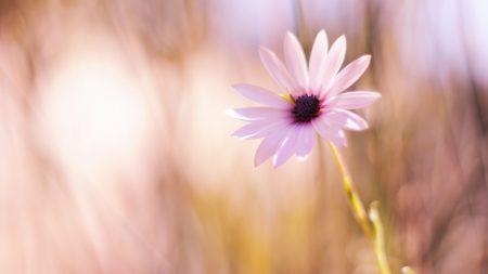 flower, meadow, blurred