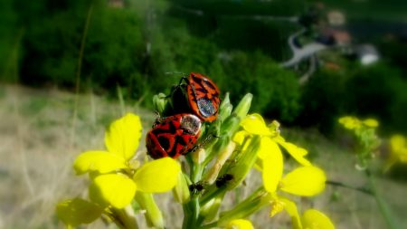 flower, meadow, insects