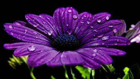 flower, night, drops
