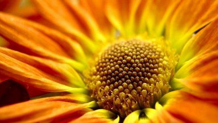 flower, orange, close-up