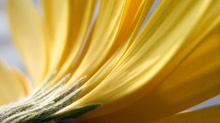 flower, petals, flowers