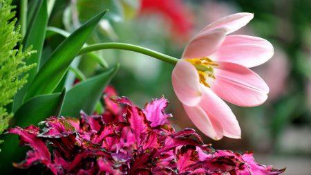 flower, petals, grass