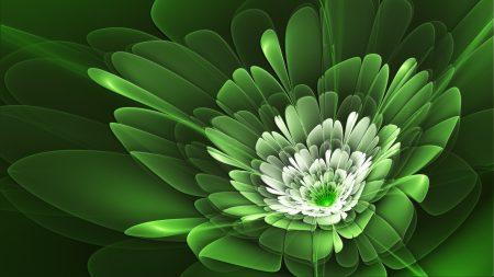 flower, petals, herbs