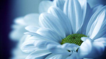 flower, petals, light