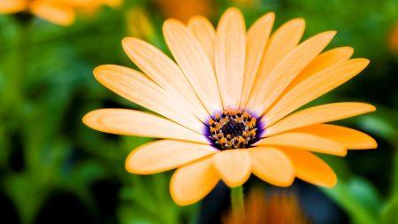 flower, petals, pollen