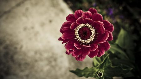 flower, petals, stem