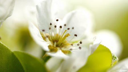flower, plant, flowering