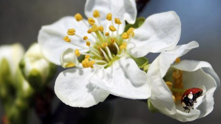flower, plant, ladybug